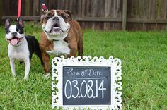 Save the date idea - with your dogs. :)