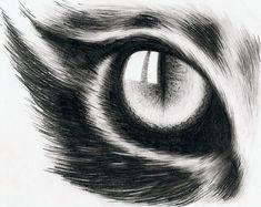 Ideas Cats Eye Drawing Beautiful For 2019 Dark Art Drawings, Pencil Art Drawings, Art Drawings Sketches, Cool Drawings, Cat Eye Tattoos, Cat Tattoo, Tattoo Art, Animal Sketches, Animal Drawings