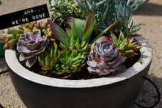 Easy weekend DIY potted succulents