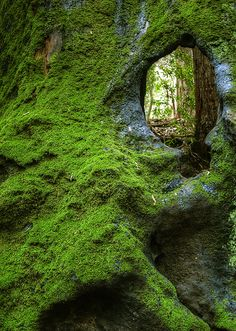 Redwood Eye....In Wunderlich County Park, near Woodside, CA, USA.