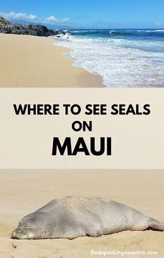 Maui Hawaii vacation ideas and maui travel tips. maui hawaii things to do. places to visit. beautiful places for world bucket list, wanderlust inspiration, in the US. Red Sand Beach, Maui Beach, Maui Hawaii, Beach Trip, Hawaii Vacation, Hawaii Travel, Vacation Ideas, Maui Scuba Diving, Snorkeling