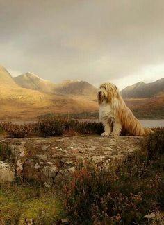 British Isles: Noble Dog, West Highlands, Scotland - by Steve Carter. Pet Dogs, Dog Cat, Doggies, Scottish Highlands, Highlands Scotland, Scotland Castles, Skye Scotland, Photoshop, Scotland Travel