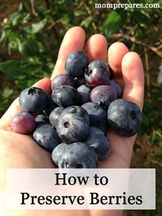 How to Preserve Berries - Methods and Ideas for enjoying the harvest year round.