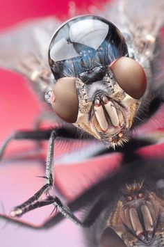 Amazing Macro Photography By Reinshtein