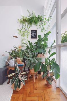 Indoor Plant Decor ideas are fun for people of all ages. You don't have to have a huge garden or your Indoor Plant Decor Ideas are perfect for small garden arrangements. There are many different plants that are suitable for… Continue Reading → Room With Plants, House Plants Decor, Plant Decor, Bedroom Plants, Room Decor Bedroom, Jungle Decorations, Jungle Bedroom, Jungle House, Home Decor Near Me