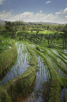 Places To Travel, Places To See, Philippines, Rice Terraces, Felder, Lombok, Laos, Bali Travel, Countries Of The World