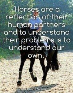 That explains how my MARE conducts herself! Graceful, Sweet, Loving And a %itch! Pretty Horses, Horse Love, Beautiful Horses, Horses And Dogs, Show Horses, Equestrian Quotes, Equestrian Problems, Inspirational Horse Quotes, Horse Training Tips
