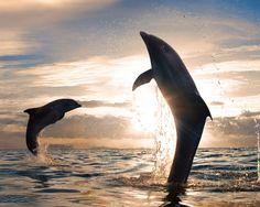 Meeresrauschen musik kostenlos