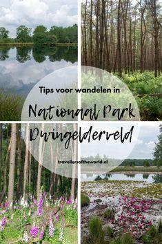 Een mooie plek in Drenthe is Nationaal Park Dwingelderveld. Je kunt ook heel mooi wandelen in Nationaal Park Dwingelderveld. In dit artikel mijn tips! Wandelen in Dwingelderveld | Wandelingen in Dwingelderveld | wandelen in Drenthe | wandelen in Nederland | Nationaal Park Dwingelderveld in Drenthe
