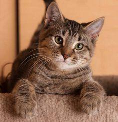 Crazy on four paws - lol! Meet Gilbert.