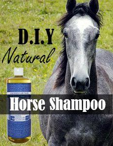 DIY Natural Horse Shampoo Recipe | Savvy Horsewoman  **SVD