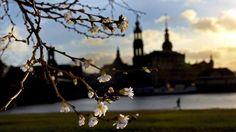 Frühling in Dresden :)