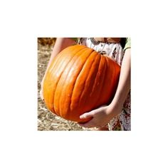 Fall Icon made by shannonmarie-xo ❤ liked on Polyvore featuring pictures, icons, fall icons, fall and backgrounds