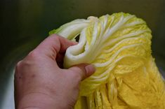 step by step tutorials on how to make authentic Korean cabbage kimchi