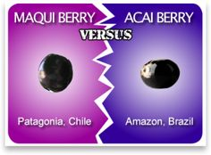 Maqui Berry or Acai Berry - which is better? In this article we have tried to find out the difference between Maqui Berry and Acai Berry. Herbal Weight Loss, Healthy Weight Loss, Reduce Weight, How To Lose Weight Fast, Benefits Of Berries, Micro Nutrients, Healthy Menu, Acai Berry, Good Fats