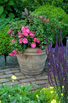 Vertical Rose Gardening This garden container with Flower Carpet Pink rose can be moved to add color as needed throughout the season. Container Plants, Container Gardening, Flower Containers, Garden Planters, Potted Garden, Porch Garden, Flower Carpet, Beautiful Gardens, Beautiful Flowers