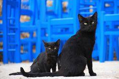 Cat, Two, Black, Greece, Animals, Animal World