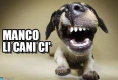 Dog : Manco, Li Cani Ci' - by cris77