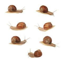 """Snail facts for kids (Week 28 Day 3) Reading """"Animals Animals"""" (Animal Journal)"""