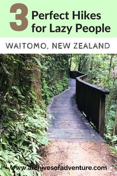 you want some good nature hikes without having to huff and puff all day, check out these 3 perfect hikes in Waitomo, New Zealand! New Zealand Itinerary, New Zealand Travel Guide, Adventure Activities, Travel Activities, New Zealand Adventure, Visit New Zealand, To Go, Lazy People, Hiking Tips