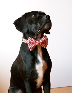 Silly Buddy Bow Tie Dog Collar - $42.00 // He'll be the best-dressed dog out on the town.