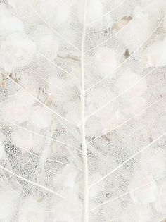 ☼ Midday Visions ☼ dreamy light & white art & photography - botanical