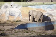 Mendoza Zoological Park in Argentina just decided its four elephants deserve better lives.