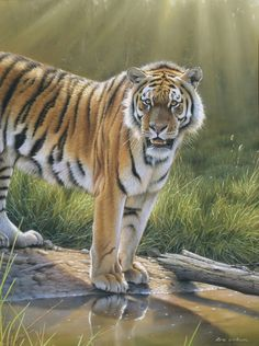 A tiger at the waters edge, Royal Chitwan, Nepal. Artist: Erik Wilson  See WIP at:  http://www.artinstructionblog.com/pastel-painting-tutorial-of-a-tiger-step-by-step    ॐ}*{ॐ