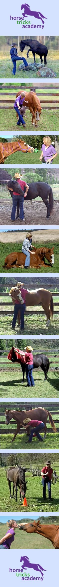 Horse Tricks Academy.  Online horse trick training.  Have fun.  Bond with your horse.