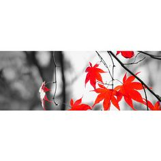 Black and White Autumn Facebook Cover with Red Leaves