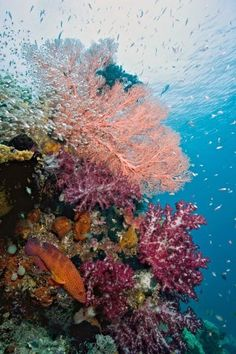 Diving Insurance Requests on the Rise As Enthusiasts Flock the Islands of Raja Ampat in Indonesia.  | Read more: http://whatwomenloves.blogspot.com/2015/02/diving-insurance-requests-on-rise-as.html