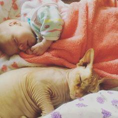 #happymoments #sleepingbeauty #sleepingtime #sleepingtogether #family #baby #babygirl #vasilisa #barfly #barflythecat #sphynx #howibecameamother #instamood #instasize #peace #love #сончас #сончас_никтонеотменял #василиса #барфлекот #барфлай #сфинкс #семья #дом #советдалюбовь #какясталамамой #мимимишки by joliemarjorie