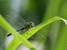 Most Individuals Associate Dragonfly Tattoo Designs 2 With Their Fake picture 16961