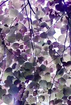 Lilac leaves. . .whether this is real or not it has a striking beauty of its own. Would make an attractive fabric pattern.