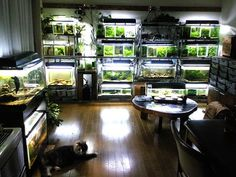 Now this is what I'm talking about! My kind of fish room!