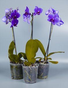 Содержание растений в пластиковых горшках