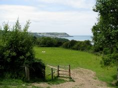 idyllic scene, sheep munching, green field, water, trees