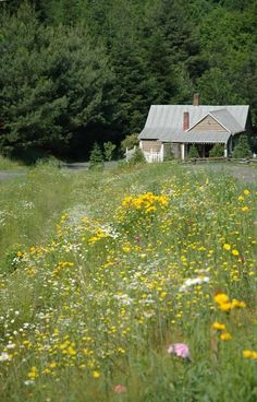 Jefferson Vacation Rental - VRBO 376235 - 2 BR Blue Ridge Mountains Cabin in NC, Quaint Mountain Cabin on Working 67 Acre Farm with Animals ...