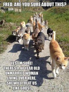 Funny Cat Memes Of The Day – 43 Pics – Lovely Animals Worl… Chat Drôle Memes Du Jour – 43 Photos – Monde des beaux animaux Funny Animal Memes, Cute Funny Animals, Funny Animal Pictures, Funny Cute, Cute Cats, Funny Memes, Animal Humour, Funny Pics, Memes Humor