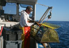 Local fishermen bring our lobsters from the ocean to our own saltwater tanks.