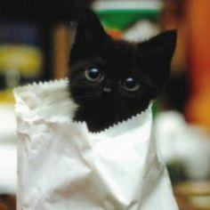 Cat in a paper bag...awwww.