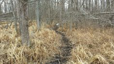 Here are the basics of deer bedding area tactics, critical for all of your whitetail habitat needs.