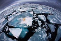Ice matters - Anna Henly - Wildlife Photographer of the Year 2012 : World in Our Hands - Winner
