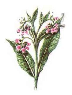 Garden Trees, Medical, Plants, Shake, Health, Remedies, Gardens, Fashion, Moda