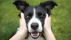 Top female dog names of The most popular names for girl dogs Top Female Dog Names, Popular Female Dog Names, Girl Dog Names, Pet Names, Celerie Rave, Dog Ages, Pet Dogs, Pets, Dog Years