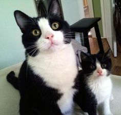 We found our new cat's kitten twin in our backyard..Meant to be. - Imgur
