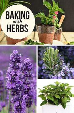 Whether picked from the garden or your local market— fresh herbs can add an unexpected and new twist to your favorite baked goods.