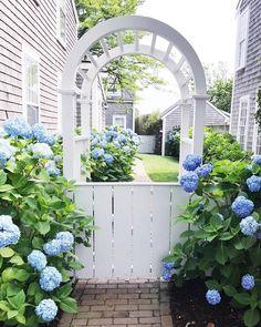 A pretty arch with blue hydrangeas.