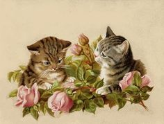 Pair of kittens with pink roses