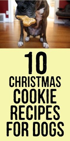 10 Christmas Cookie Recipes for Dogs! Placate your pup with these dog-friendly creations, rather than enduring endless puppy dog eyes... #dogChristmascookies #dogtreats